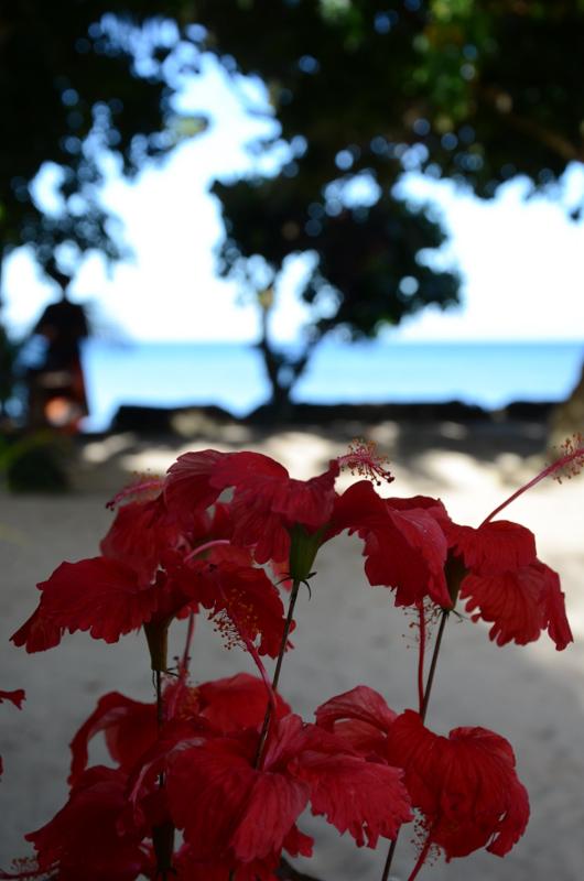 Fiji_yasawas25