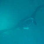 Fiji_yasawas08