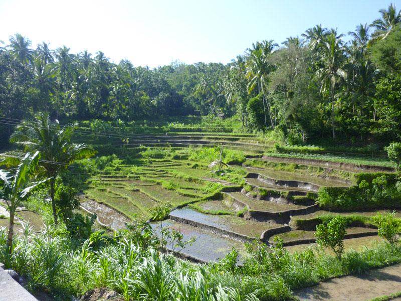 Amed - Bali03