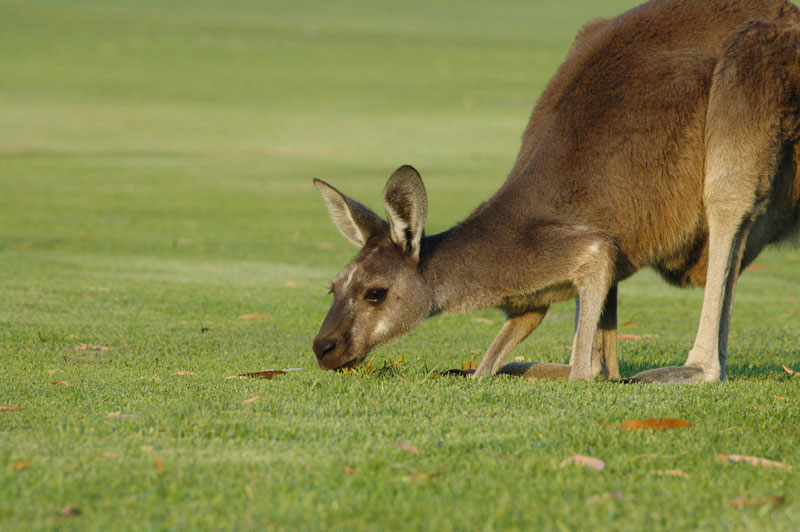 Margaret River Golf07