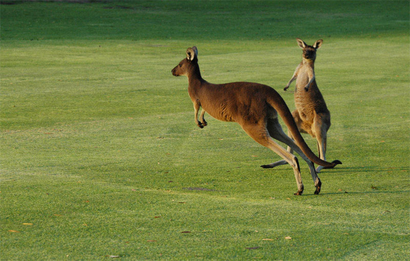 Margaret River Golf09