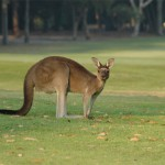 Margaret River Golf01