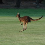 Margaret River Golf10