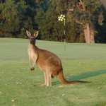 Margaret River Golf11