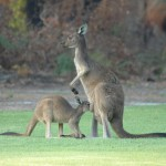 Margaret River Golf12