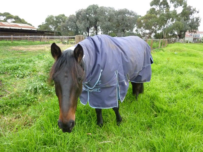 Highfield Equestrian Centre14