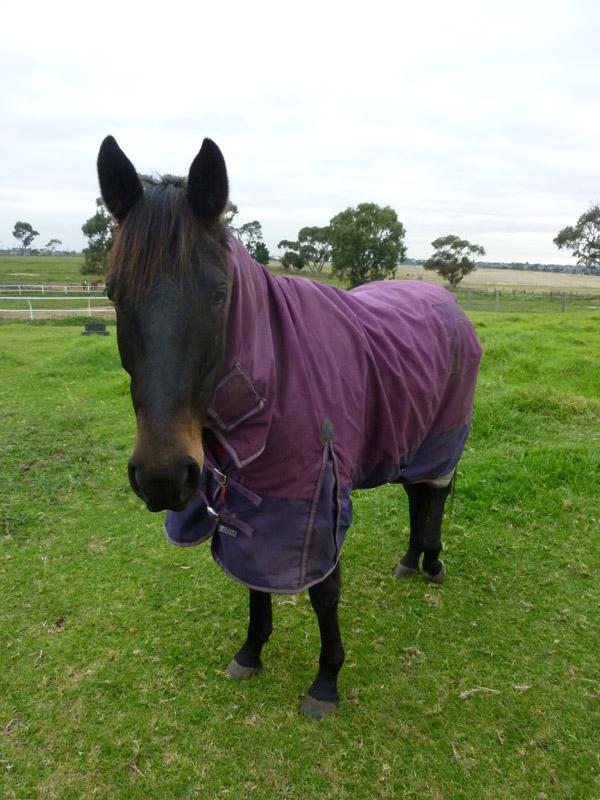 Highfield Equestrian Centre15