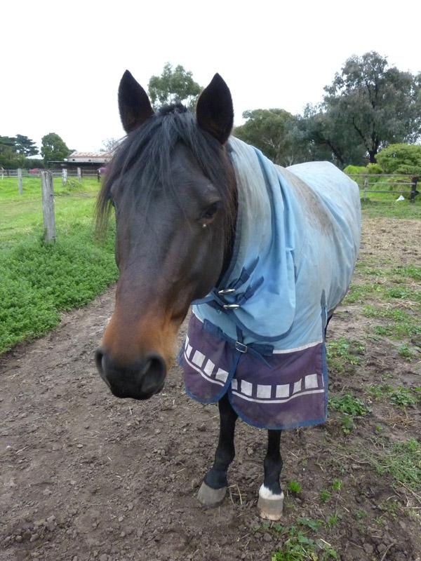 Highfield Equestrian Centre17
