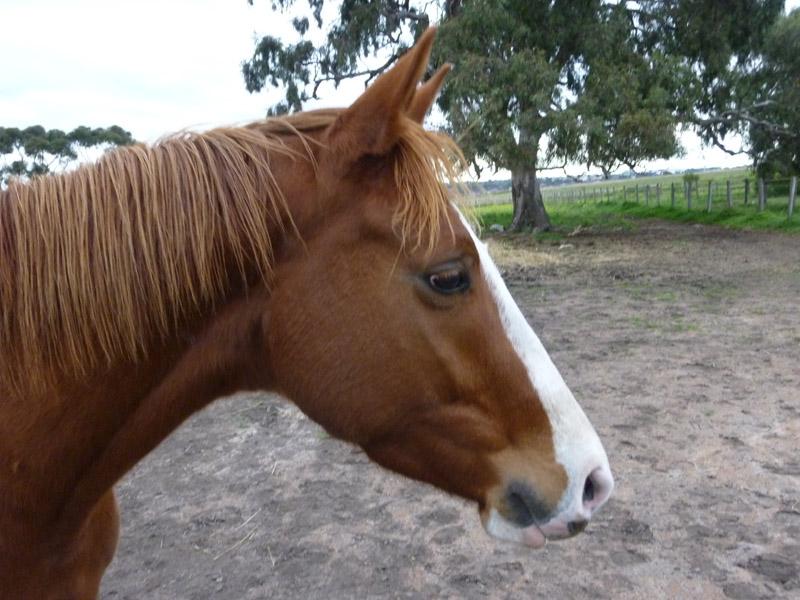 Highfield Equestrian Centre21