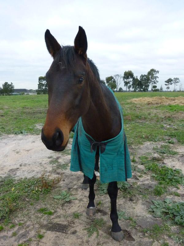 Highfield Equestrian Centre23