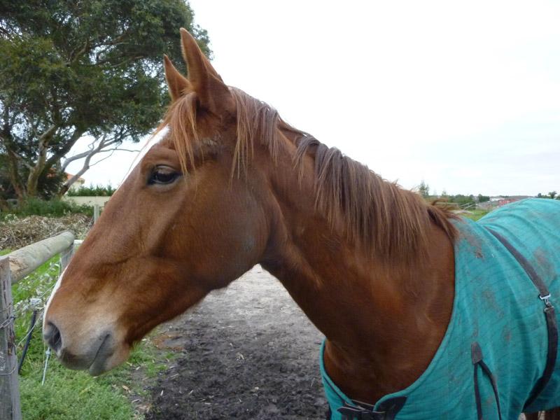 Highfield Equestrian Centre24