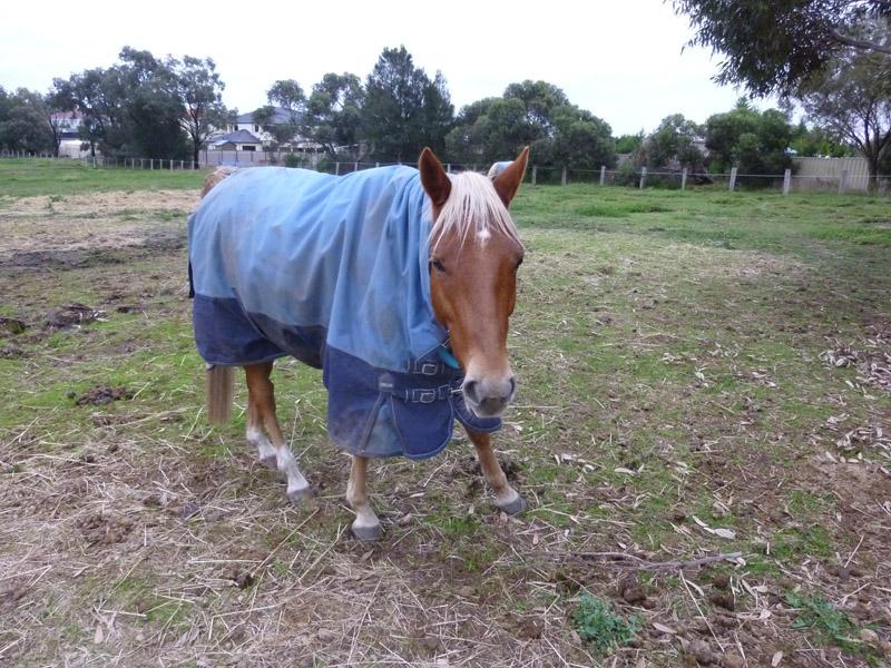 Highfield Equestrian Centre25