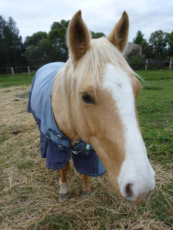 Highfield Equestrian Centre26