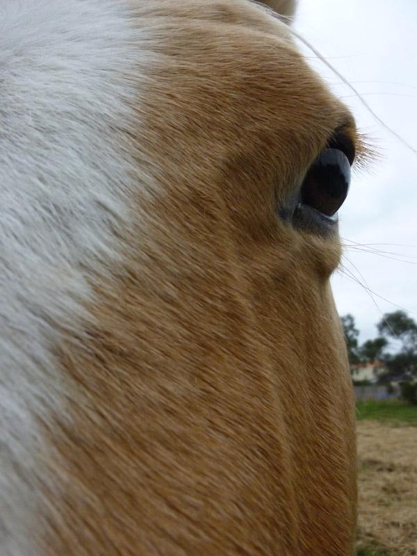 Highfield Equestrian Centre27