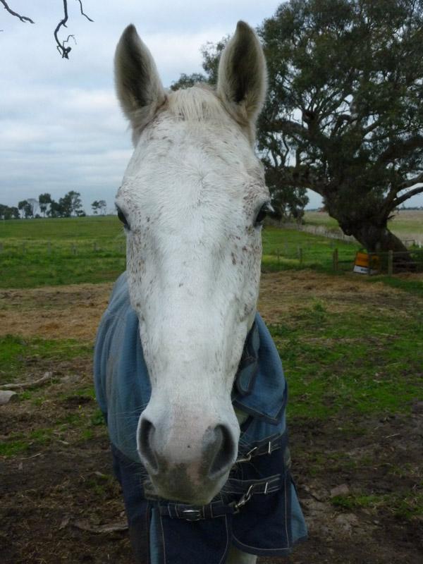 Highfield Equestrian Centre32