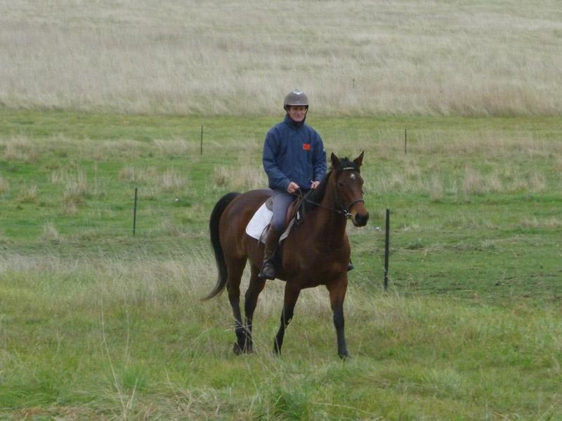 Highfield Equestrian Centre36