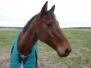 Highfield Equestrian Centre
