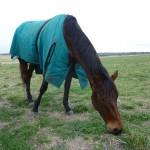 Highfield Equestrian Centre02