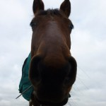 Highfield Equestrian Centre03