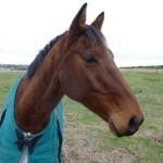 Highfield Equestrian Centre04