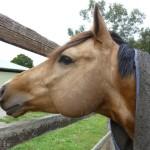Highfield Equestrian Centre05