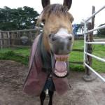 Highfield Equestrian Centre07