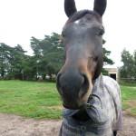 Highfield Equestrian Centre08