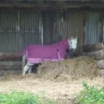 Highfield Equestrian Centre09
