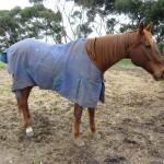 Highfield Equestrian Centre10
