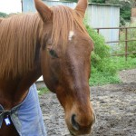 Highfield Equestrian Centre11