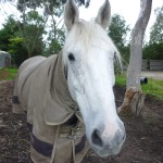 Highfield Equestrian Centre12