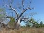 Kununurra - Le bush avec le DEC