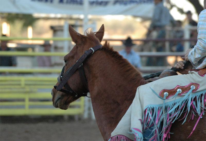 Kununurra - Rodeo15
