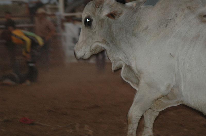 Kununurra - Rodeo21
