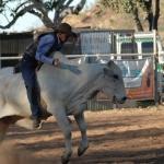 Kununurra - Rodeo02