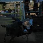 Kununurra - Rodeo07