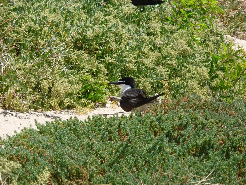 Penguin Island06