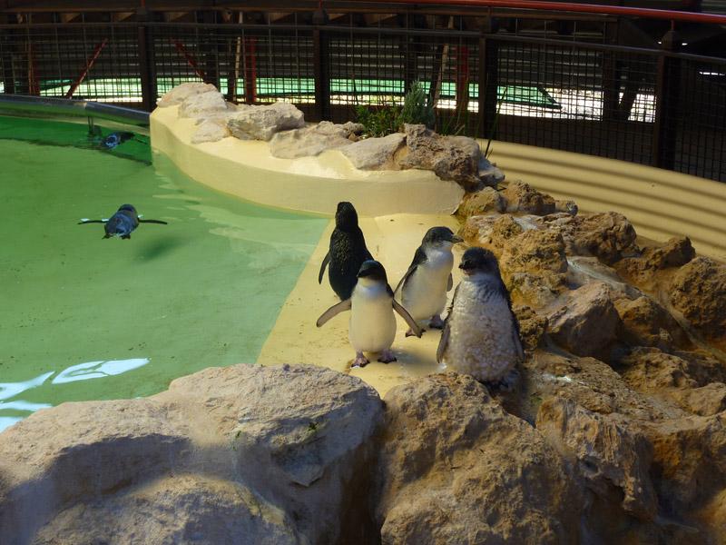 Penguin Island07