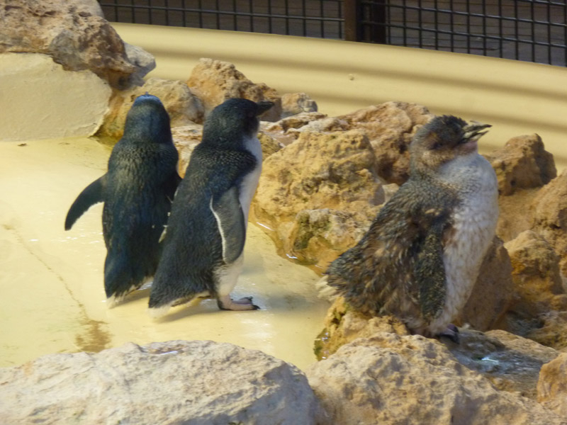 Penguin Island08