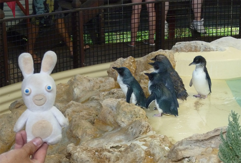 Penguin Island09