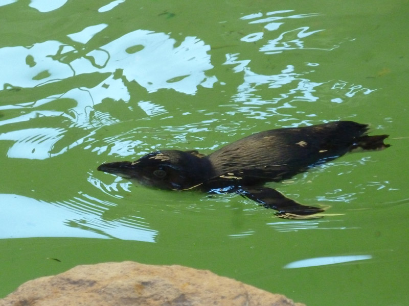 Penguin Island11