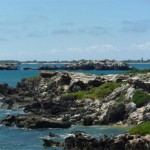 Penguin Island01