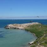 Penguin Island05