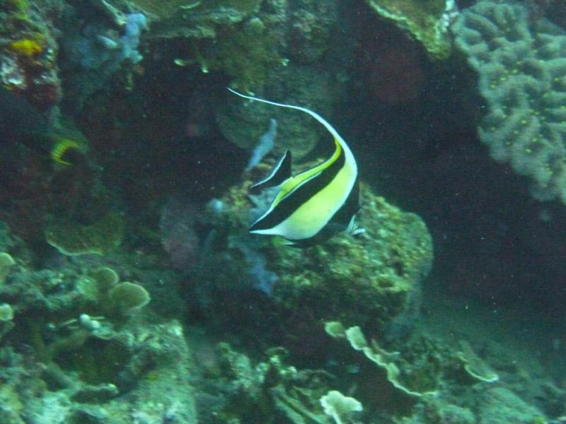 Plongee a Jemeluk03