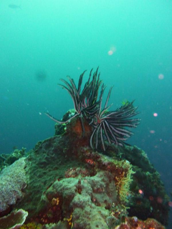 Plongee a Jemeluk05