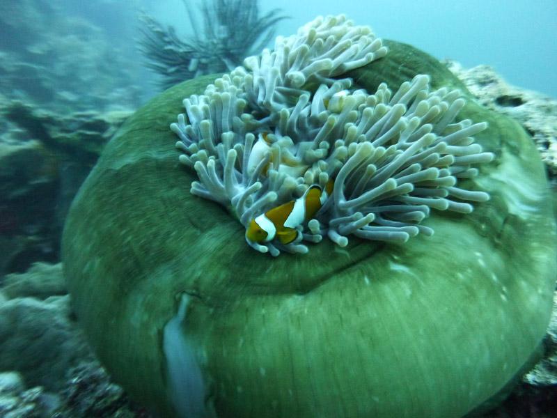 Plongee a Jemeluk08