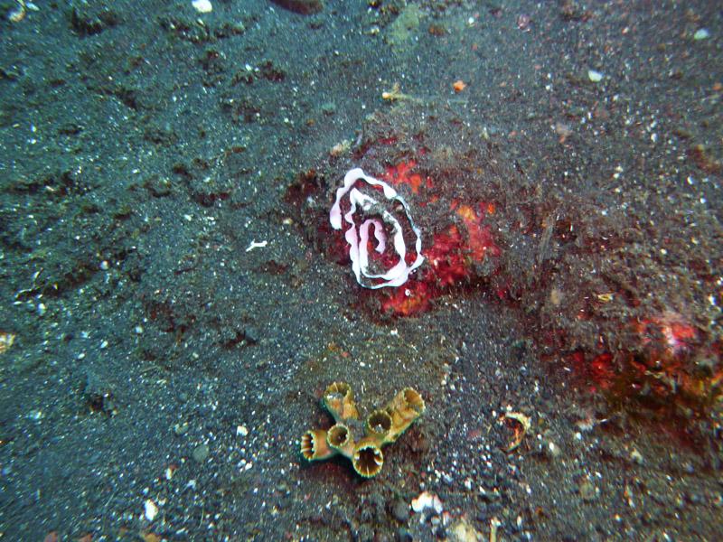 Plongee au Liberty Wreck04