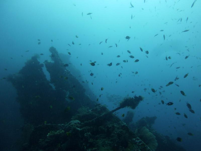 Plongee au Liberty Wreck06