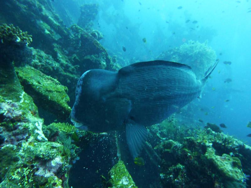 Plongee au Liberty Wreck07