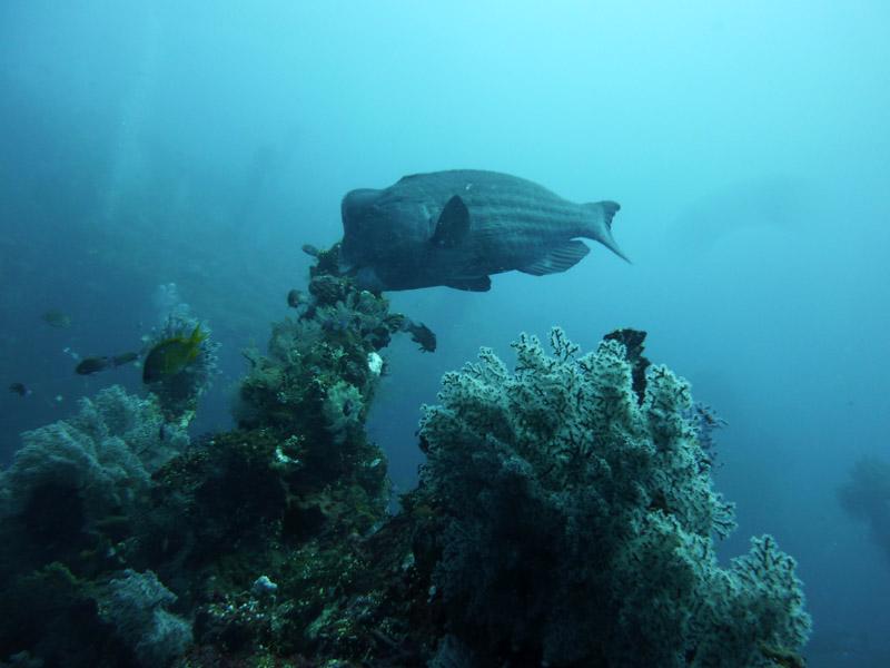 Plongee au Liberty Wreck09